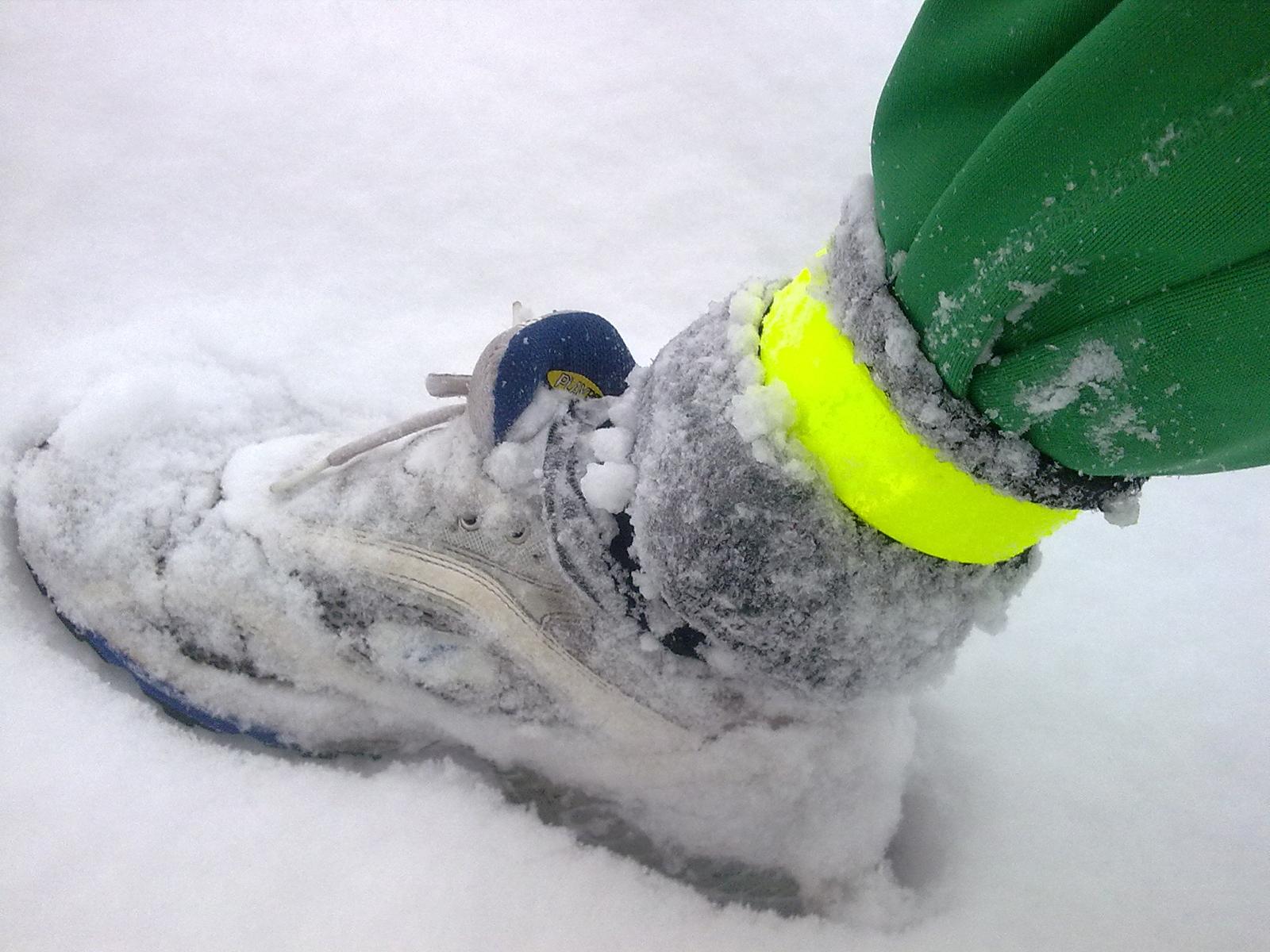 snow_forr